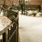 Noreaster_4